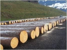 1 Tiroler Nadelwertholzsubmission 2014 Detail Aktuelles Wald