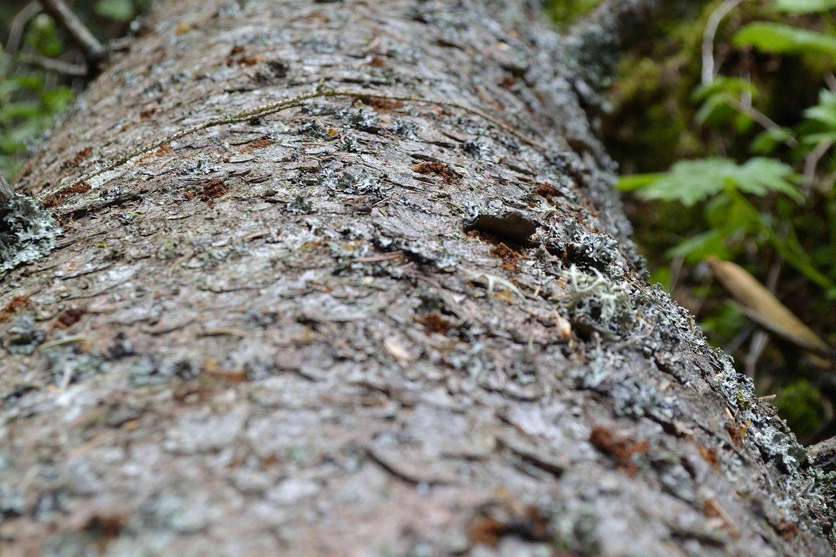 Super Borkenkäferbekämpfung in Osttirol - Detail - Aktuelles - Wald &QG_58
